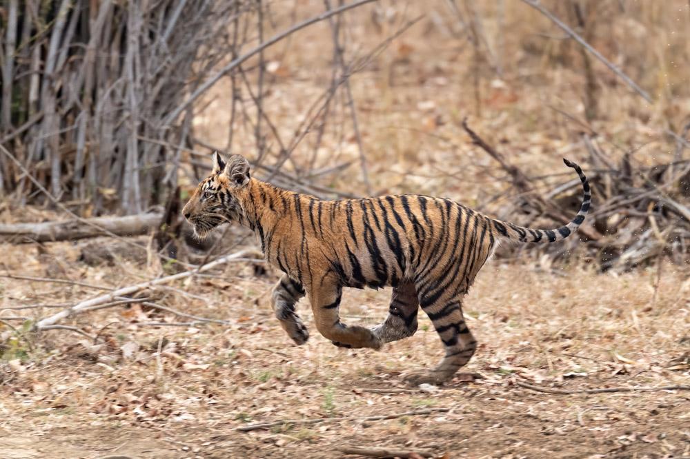 https://www.wildworldindia.com/wp-content/uploads/2019/10/DSC_0007.jpg