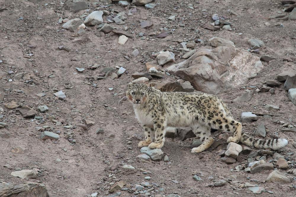 https://www.wildworldindia.com/wp-content/uploads/2019/10/IMG_3798.jpg