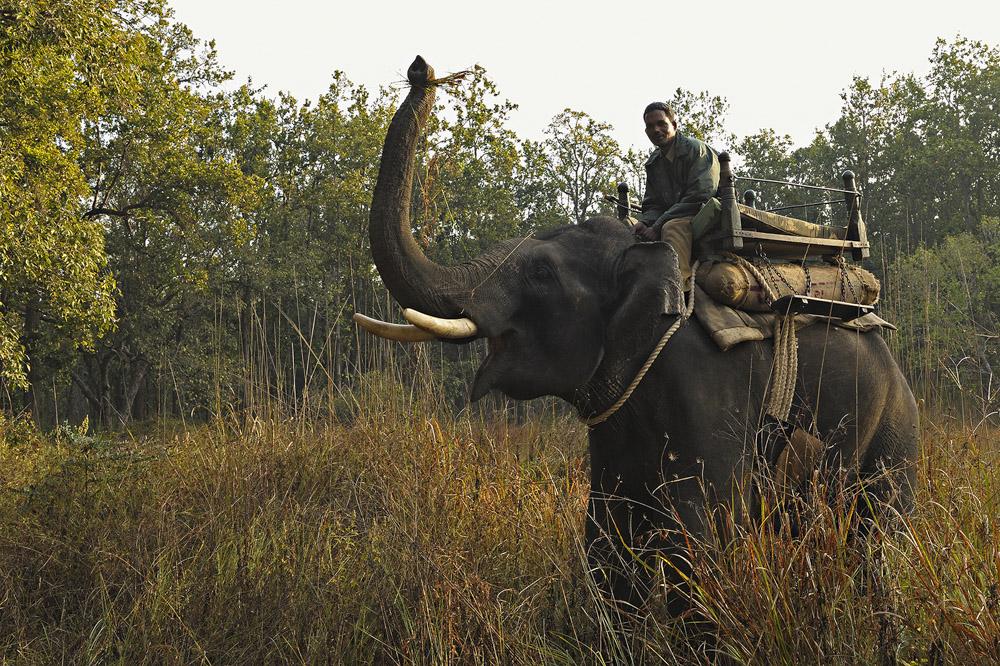 https://www.wildworldindia.com/wp-content/uploads/2020/01/ADS_000009378.jpg