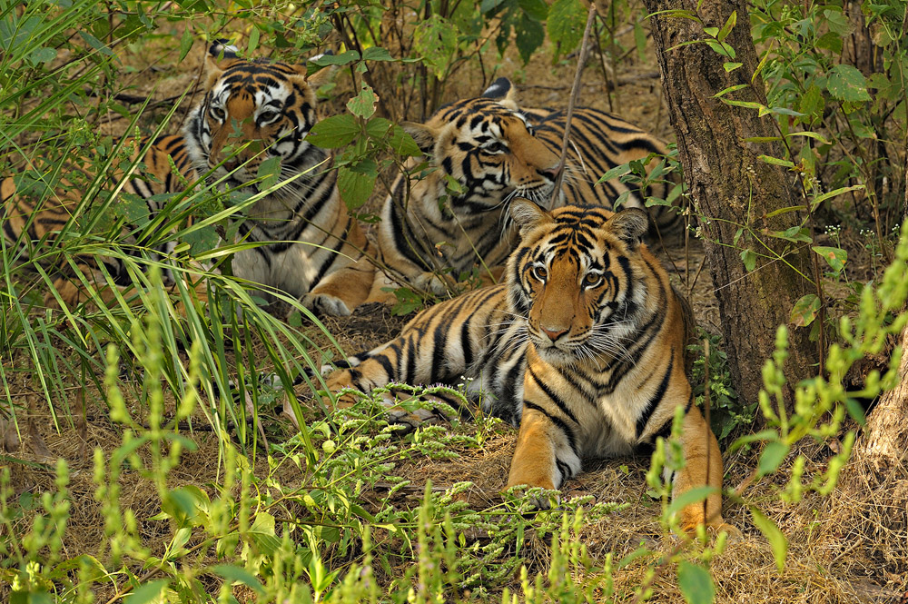 https://www.wildworldindia.com/wp-content/uploads/2020/01/ADS_000009394-2801759605-O.jpg