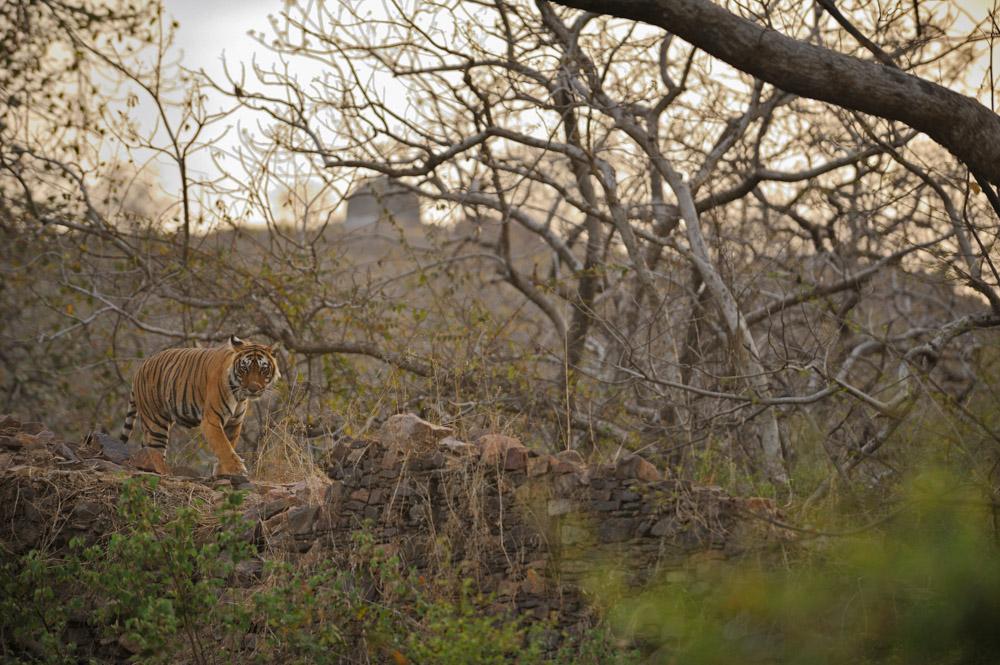 https://www.wildworldindia.com/wp-content/uploads/2020/01/ADS_000041705-2802741852-O.jpg