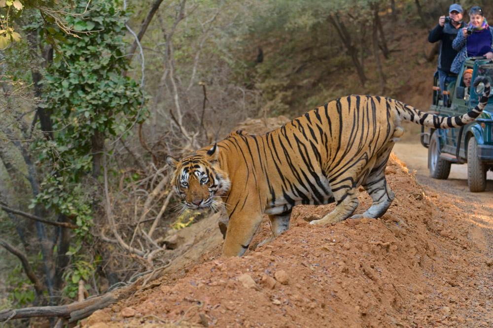https://www.wildworldindia.com/wp-content/uploads/2020/01/ADS_000061572-3371340482-O.jpg