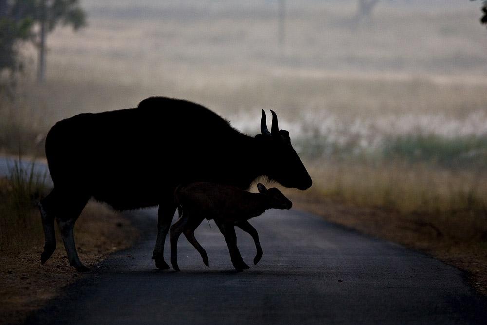 https://wildworldindia.com/wp-content/uploads/2020/01/AS_000002866-bigger-778330223-OA.jpg