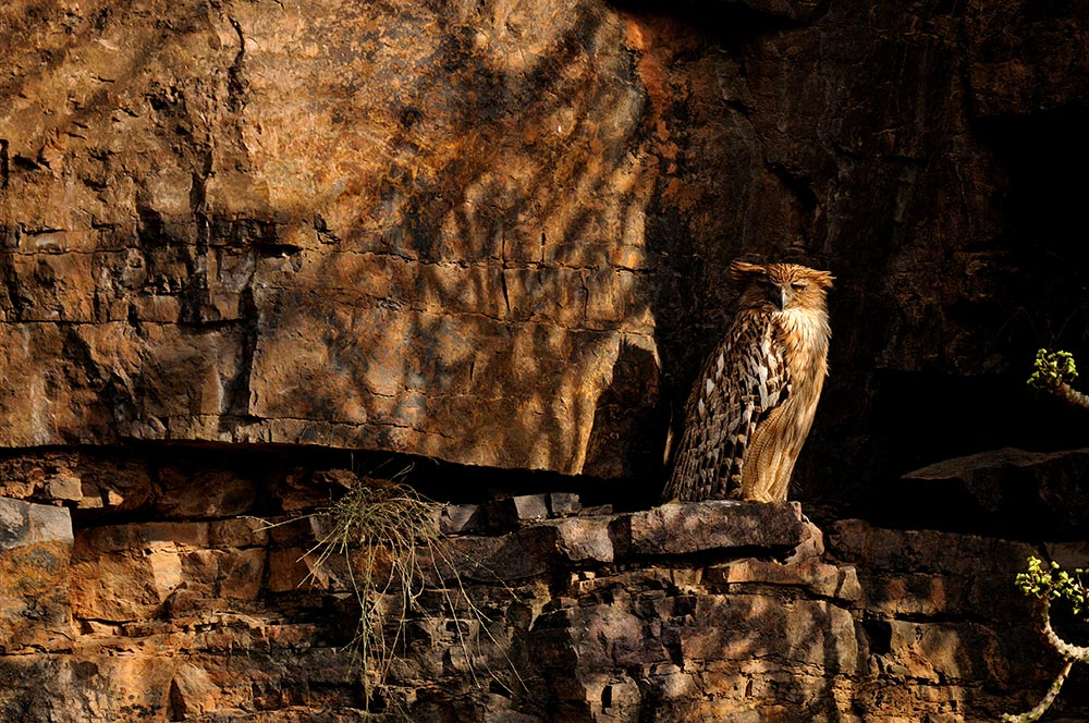 https://www.wildworldindia.com/wp-content/uploads/2020/01/Brown-Fish-Owl_Ranthambhore_Wild-World-India_Tiger-Photography.jpg
