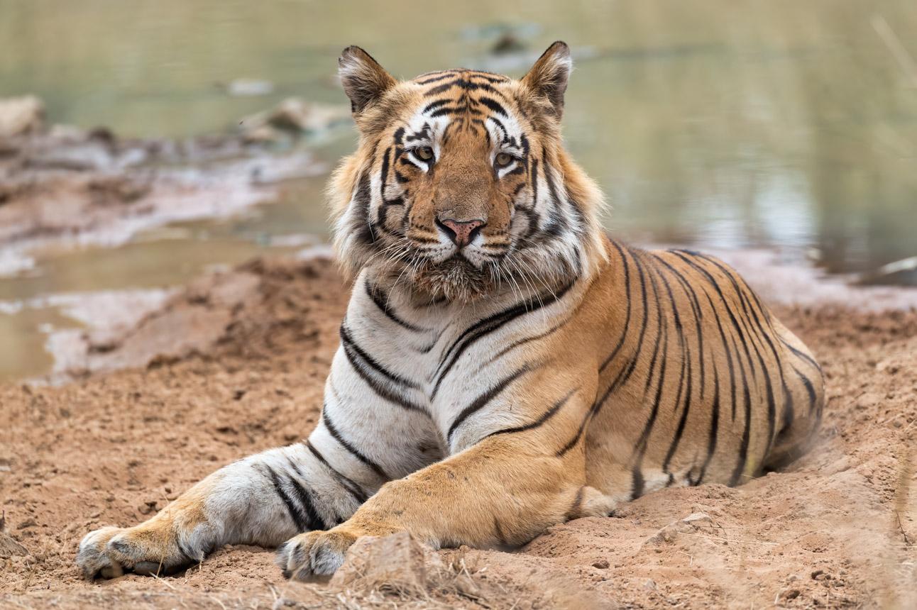 https://www.wildworldindia.com/wp-content/uploads/2020/01/DSC_0279.jpg