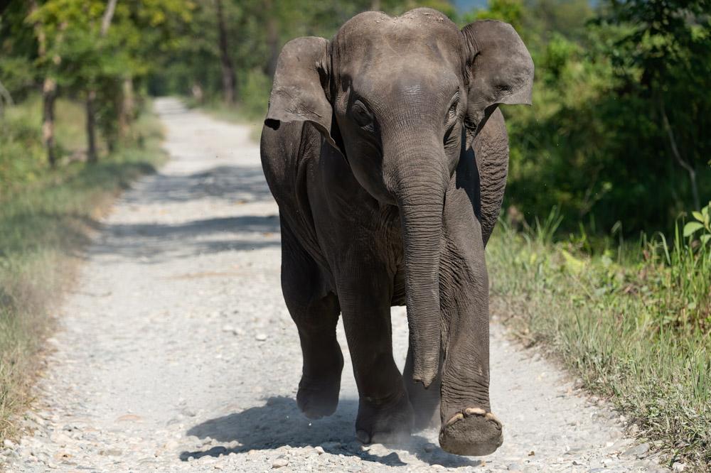 https://www.wildworldindia.com/wp-content/uploads/2020/01/DSC_5646.jpg
