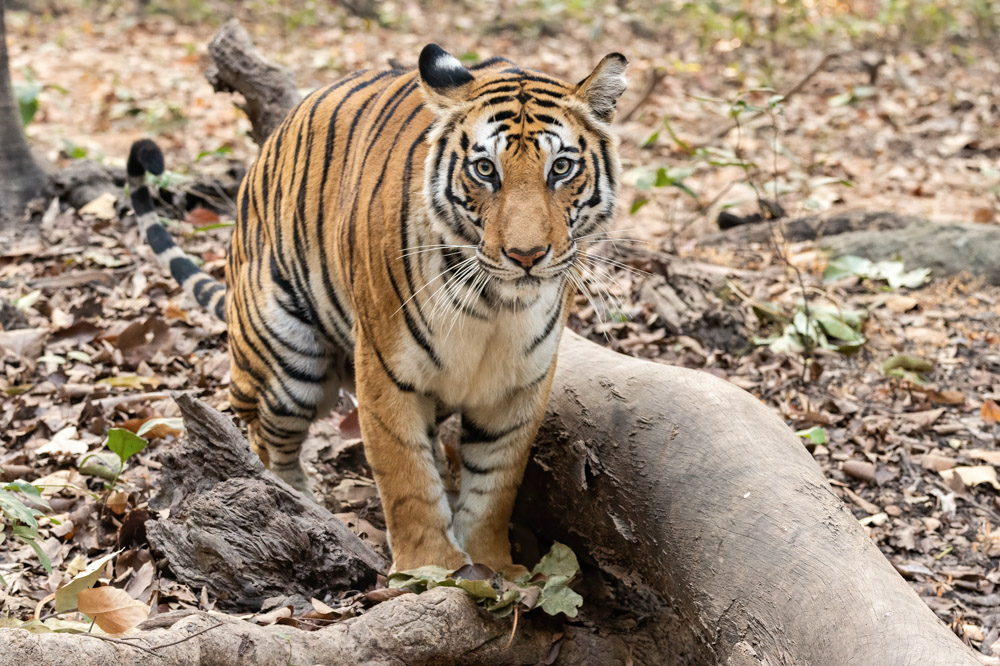 https://www.wildworldindia.com/wp-content/uploads/2020/01/DSC_7084.jpg