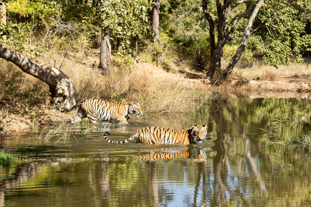 https://www.wildworldindia.com/wp-content/uploads/2020/01/DSC_7366.jpg