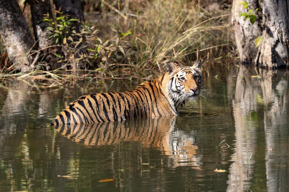 https://www.wildworldindia.com/wp-content/uploads/2020/01/DSC_7540.jpg