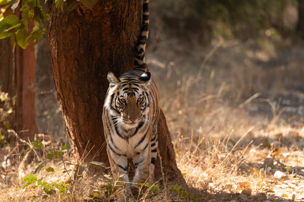 https://www.wildworldindia.com/wp-content/uploads/2020/01/DSC_7659.jpg
