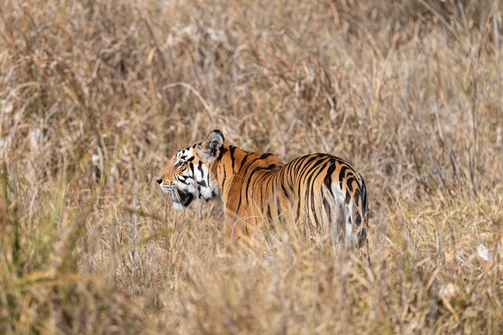 https://www.wildworldindia.com/wp-content/uploads/2020/01/DSC_7692.jpg