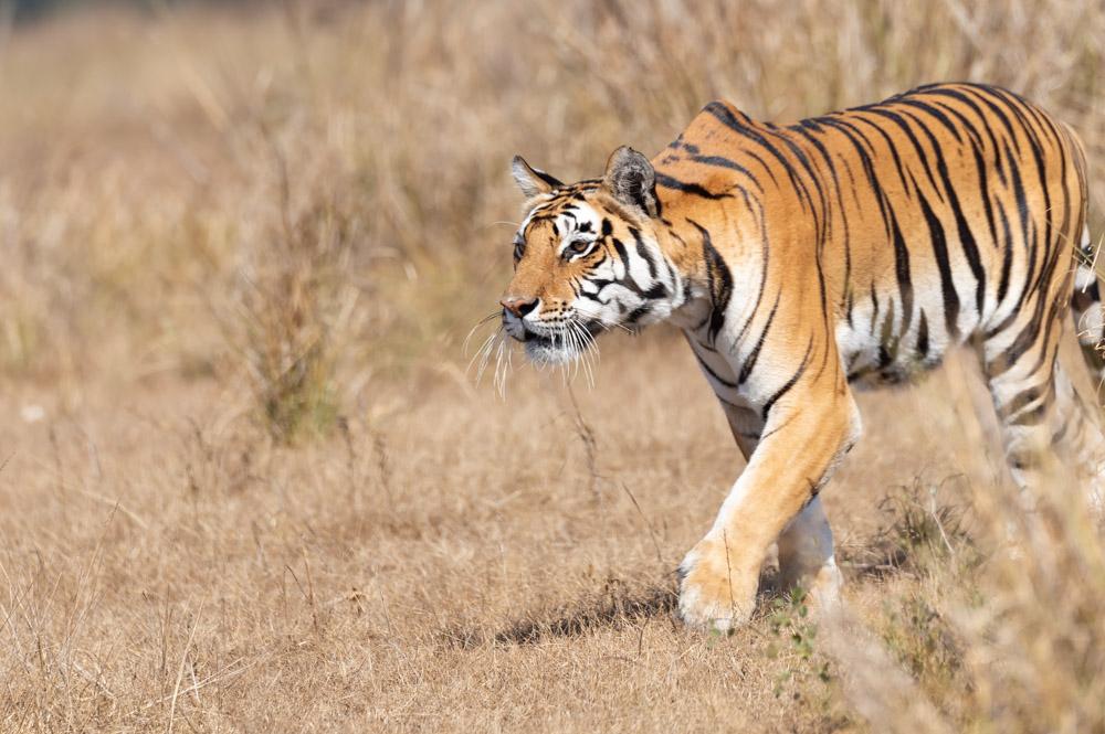 https://www.wildworldindia.com/wp-content/uploads/2020/01/DSC_7726.jpg
