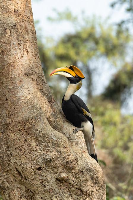 https://www.wildworldindia.com/wp-content/uploads/2020/01/DSC_8092.jpg