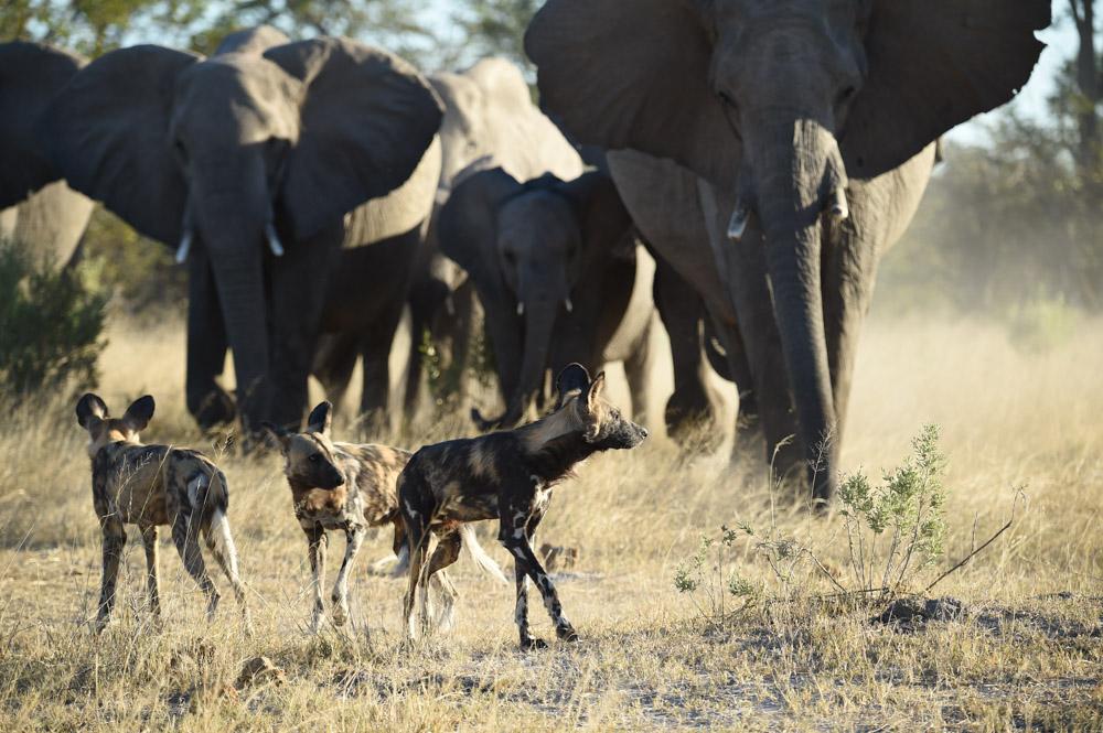 https://www.wildworldindia.com/wp-content/uploads/2020/01/DSC_8796.jpg