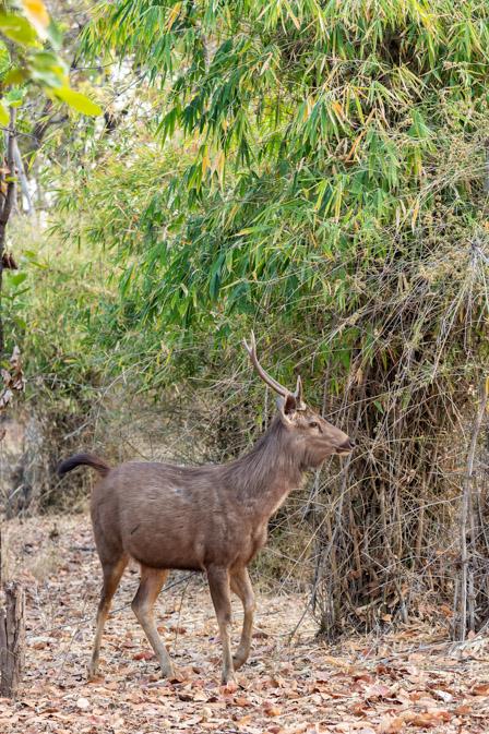 https://www.wildworldindia.com/wp-content/uploads/2020/01/DSC_8805.jpg