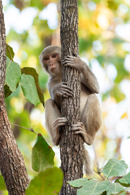https://www.wildworldindia.com/wp-content/uploads/2020/01/DSC_8916.jpg