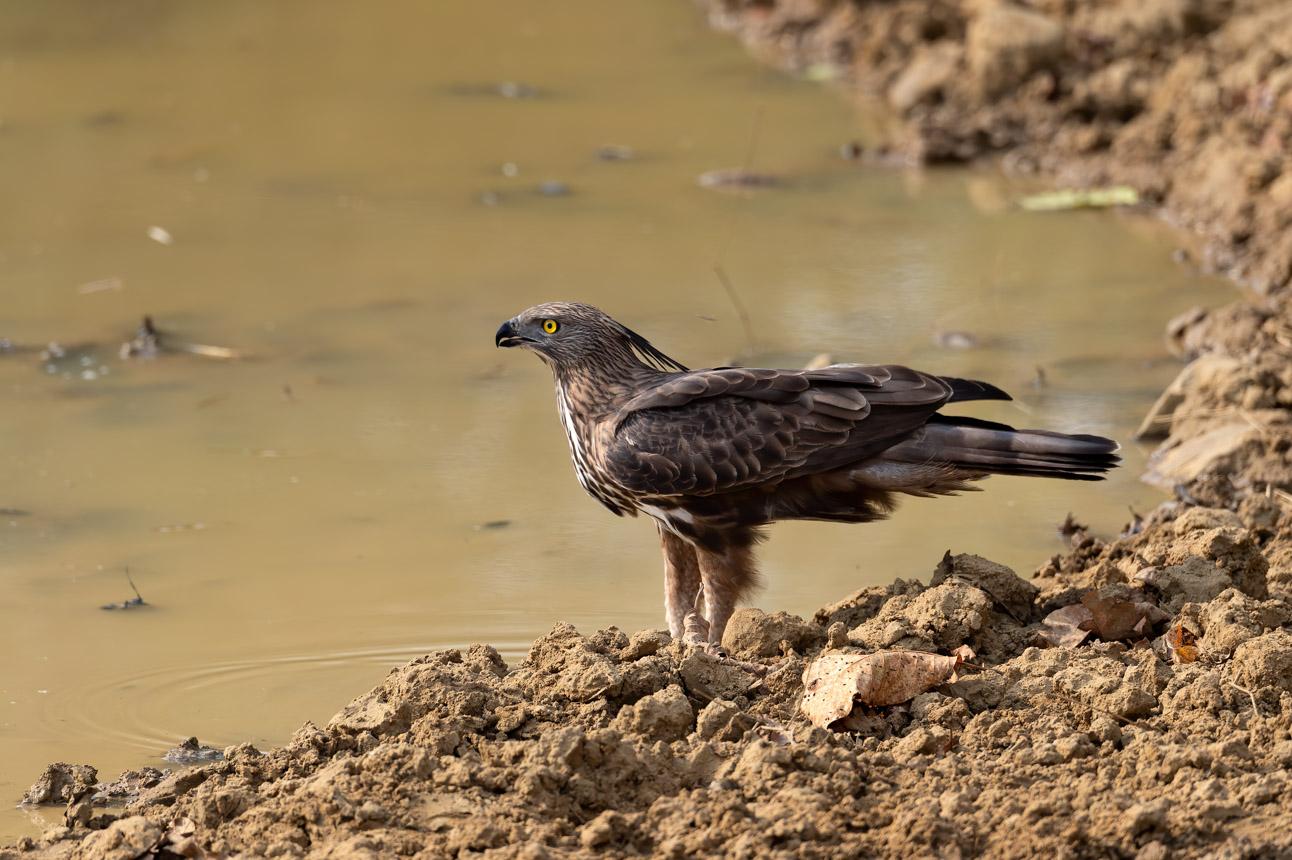 https://www.wildworldindia.com/wp-content/uploads/2020/01/DSC_9002.jpg