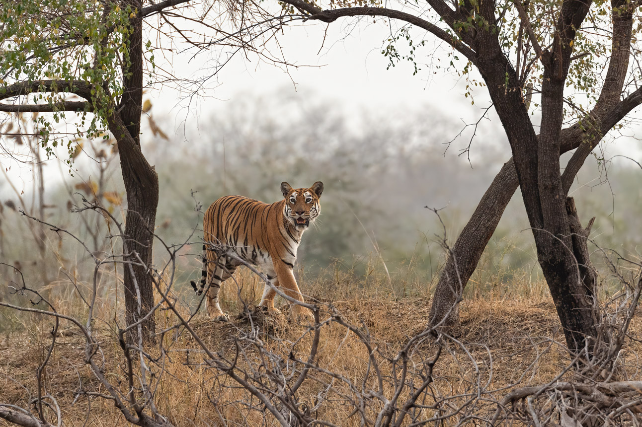 https://www.wildworldindia.com/wp-content/uploads/2020/01/DSC_9088.jpg
