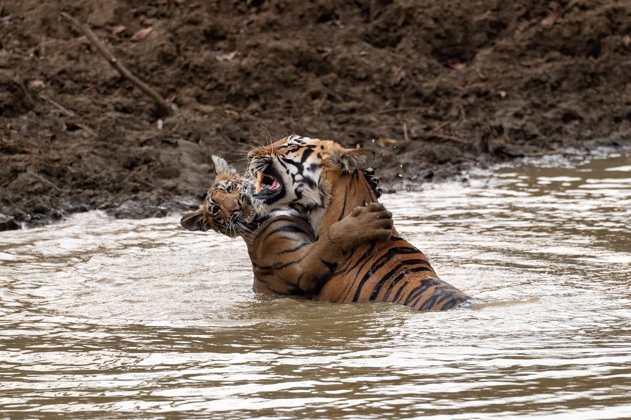 https://www.wildworldindia.com/wp-content/uploads/2020/01/DSC_9945.jpg