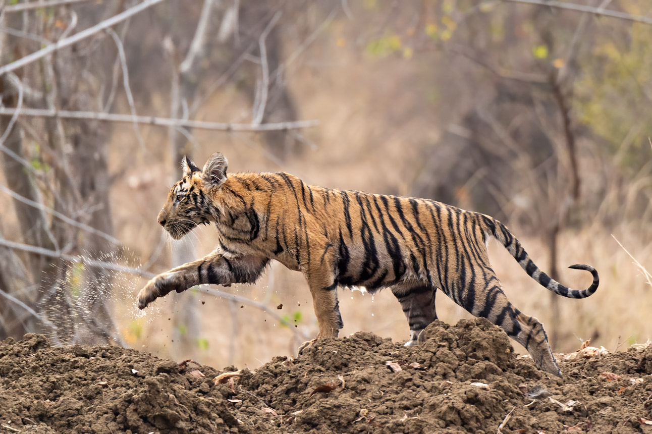 https://wildworldindia.com/wp-content/uploads/2020/01/DSC_9994.jpg