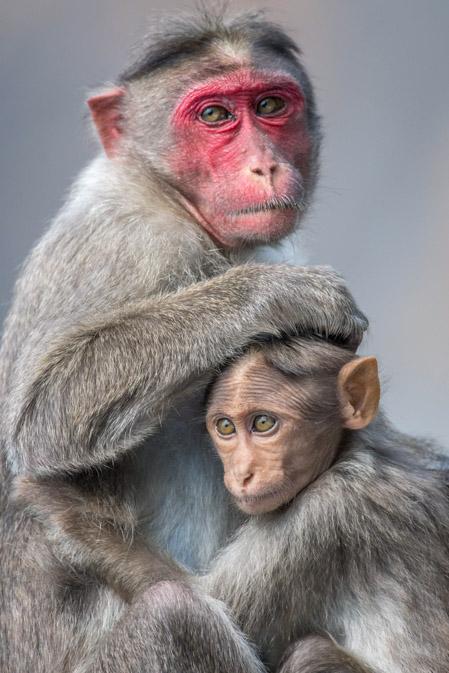 https://wildworldindia.com/wp-content/uploads/2020/01/India_2019_JSenn_Wayanad2.jpg