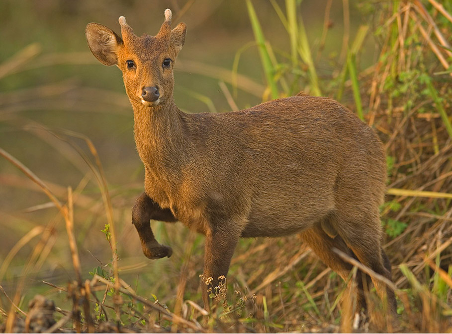 https://www.wildworldindia.com/wp-content/uploads/2020/01/Spyder2PRO-2.jpg